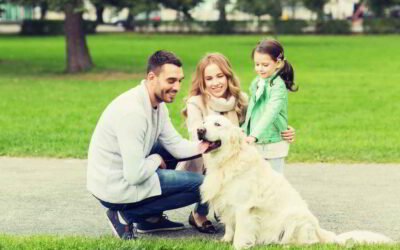 When is the right time to bring another pet into the family